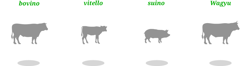 bovino, vitello, suino, Wagyu
